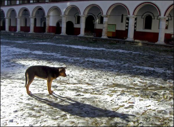 Chien errant dans le monastère de Rila (Bulgarie)